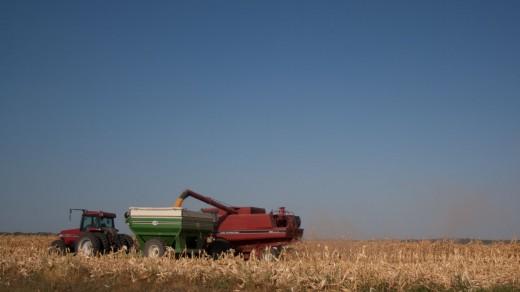 Case Combine unloading grain