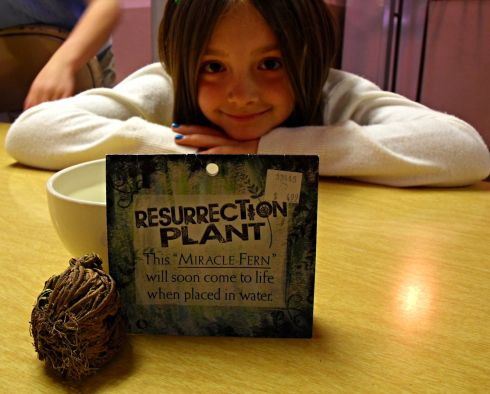 Little Jen didn't know what to expect with this plant, she didn't quite believe it would work