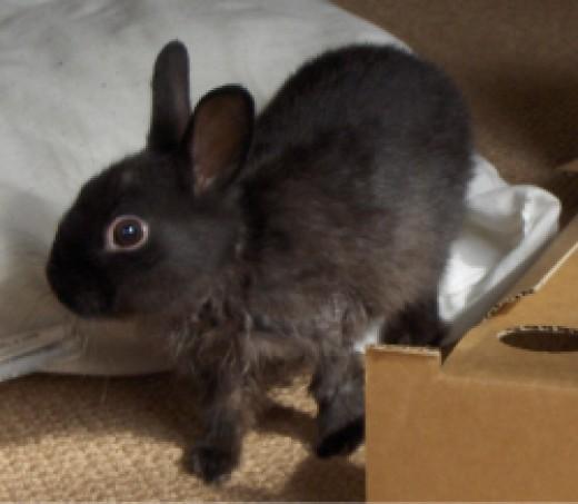 Rabbit with wet fur