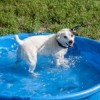 How to Cool Off Your Dog in The Summer