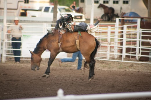 Photojournalism 2012 division, received a blue ribbon of my bronc riding photo