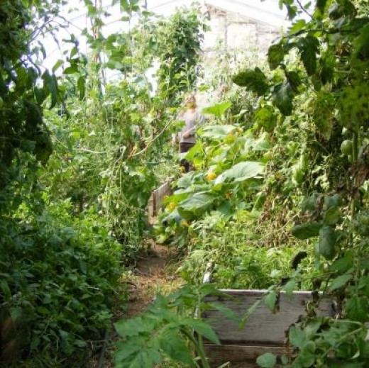 Our Overgrown Greenhouse