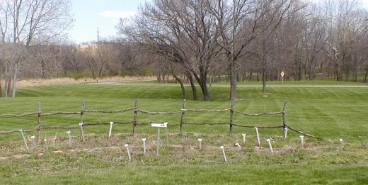 The last leg of the access road you came in on. Stakes in the foreground identify varieties of flowers native to Kansas that will soon be blooming in this bed.