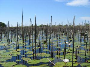 Onkovango Delta in Botswana.