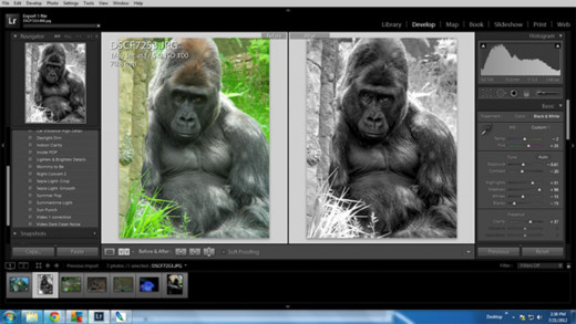 Using Lightroom to turn a color photo to Black and White