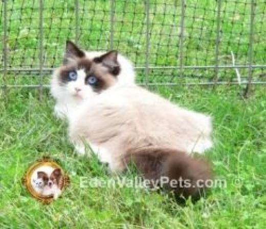 Make Your Own Cat Enclosure