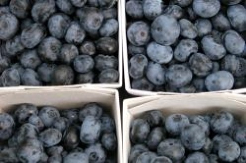 Boxes of Blueberries