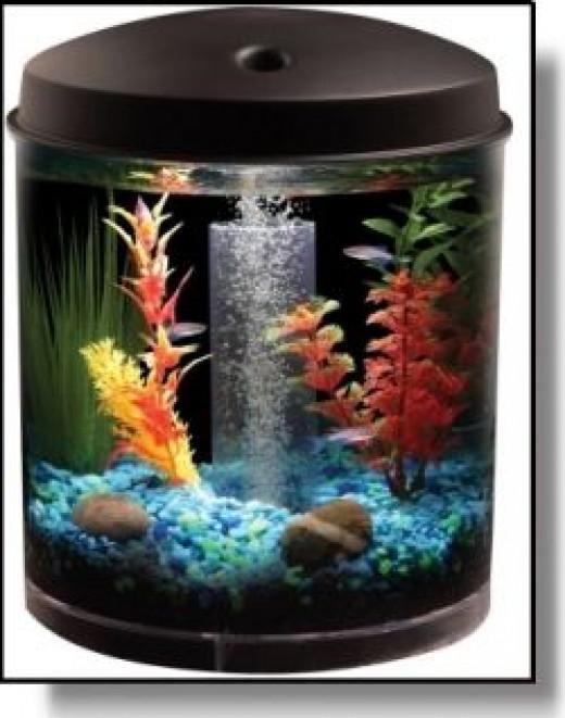 Make marimo Moss Ball Aquarium
