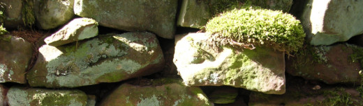 A rolling stone gathers no moss!