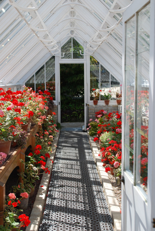 Inside a glasshouse in the Productive Gardens.