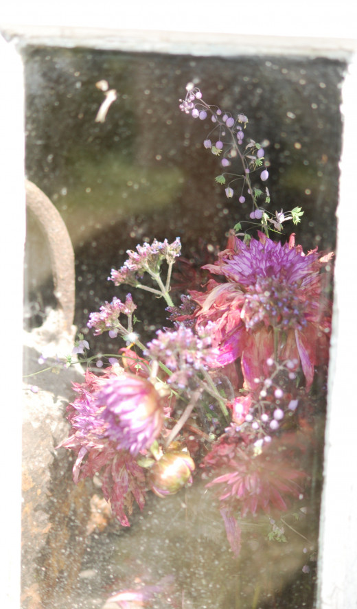 Dried flowers through a window.