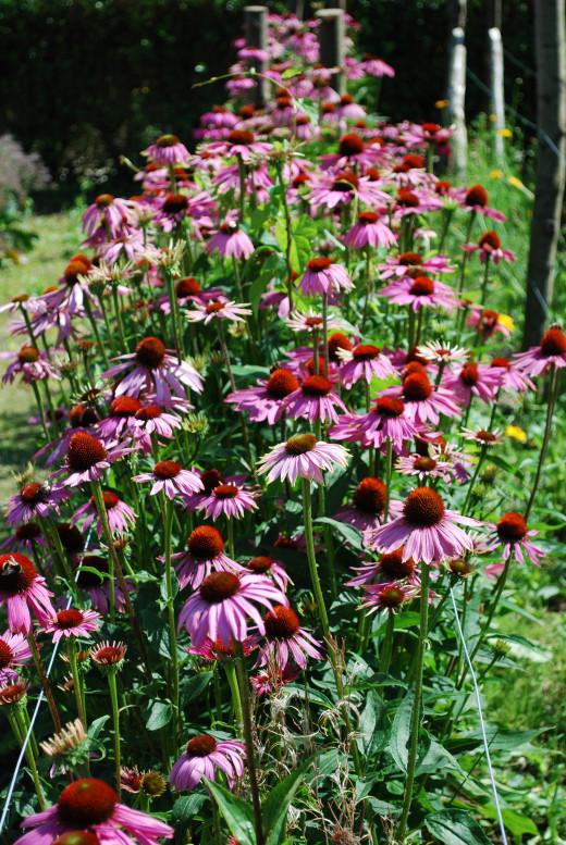 The Flower Garden.