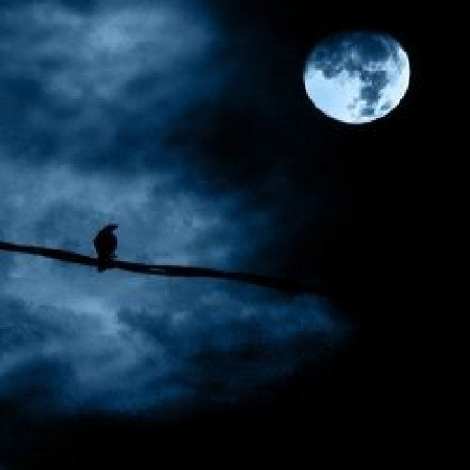 Spooky crow at night.