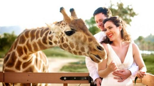 zoo.sandiegozoo.org