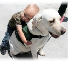 deafdogsrock.com
