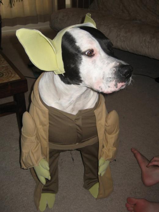 Yoda he is