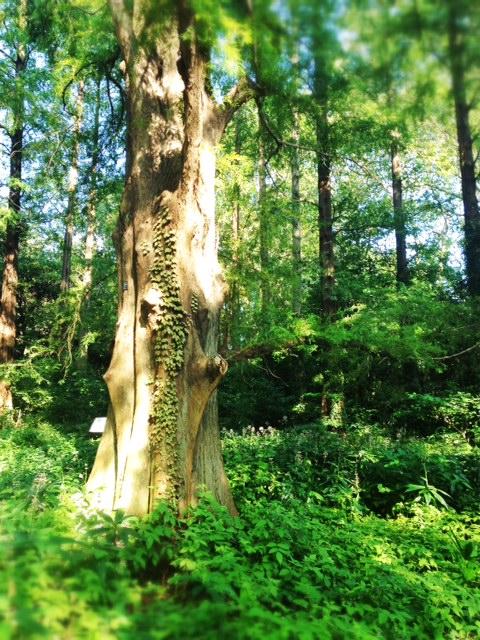 Walk into an urban forest.