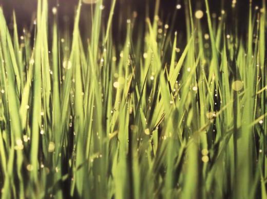 Grass taken up real close.