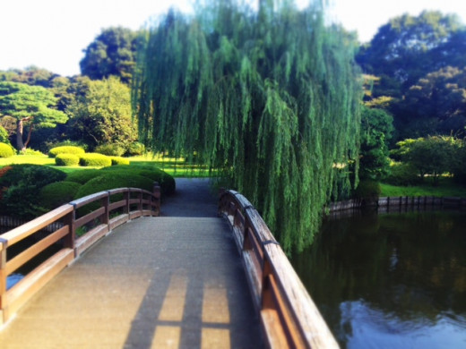 Walk across the Japanese bridge and have a chat with the Japanese carps, turtles and ducks.