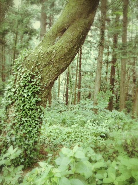 Lush greenery all around