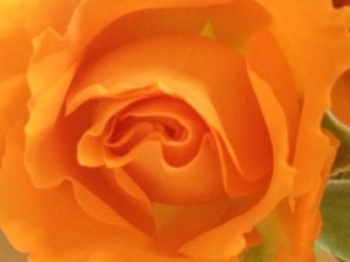 Flower Close Up Shot