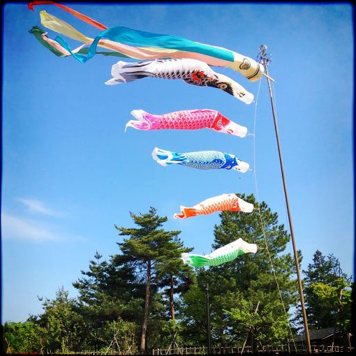 Koinobori at Showa Kinen Park