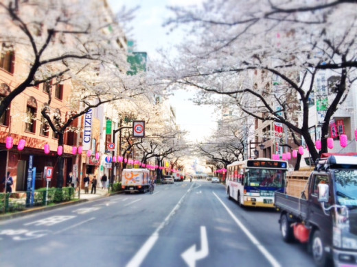 Nakano is know for their sakura-lined streets, which is just a 5-minute bus ride from my place. This became her favorite place to visit.