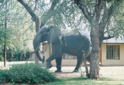Elephant walking in between chalets at a hotel in kariba