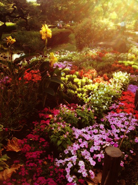 Flower Garden at Sunset