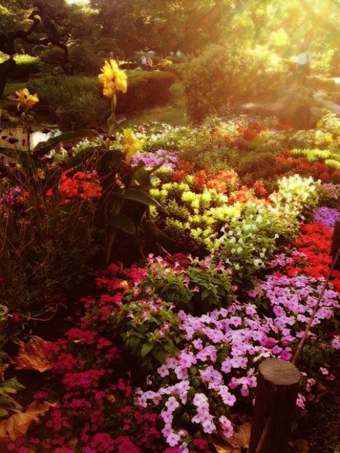 Flower Garden at Sunset