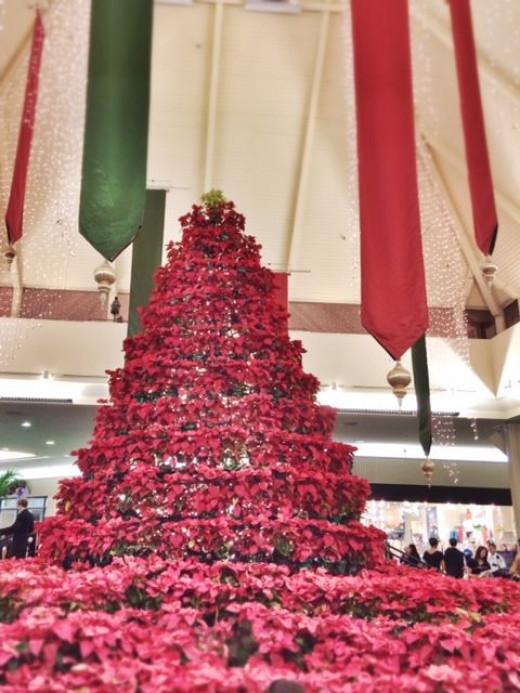 Beautiful poinsettia tree at Kahala Mall.