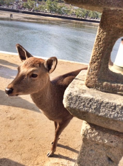 Wild deers that pop out of nowhere.
