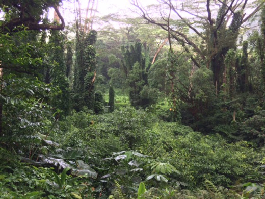 Entrance to the Manoa Falls Hike