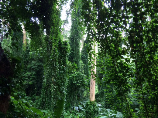 The rainforest is unbelievably green and alive with life.