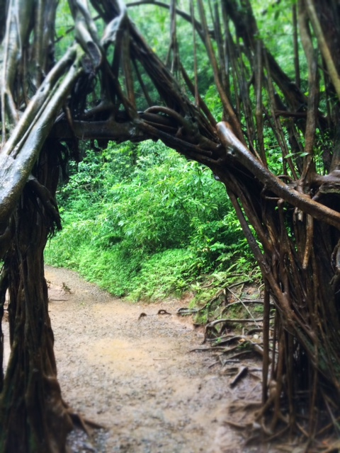 Natural gate built by Mother Nature.