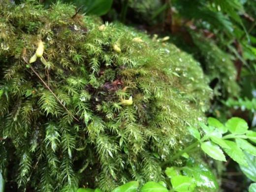 manoa falls foliage