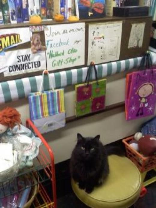 Gypsy the cat - the Hubbard Ohio Gift Shop customer greeter