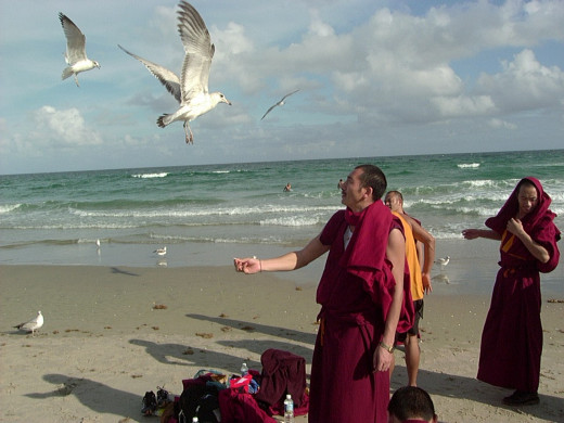 While some monks went swimming others had fun feeding the seagulls