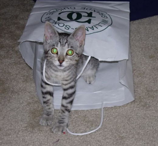 Her favorite thing is paper bags.  No matter how many toys I buy for her, that is what she wants to play with.