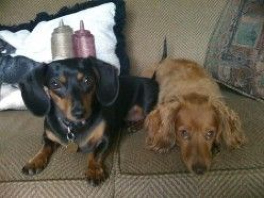 Our Beautiful Doxies