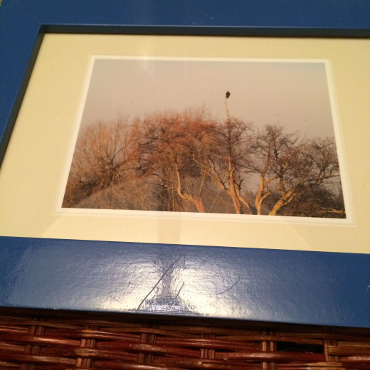 Blue picture frames capturing nature.