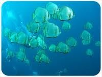 bali-snorkeling.jpg