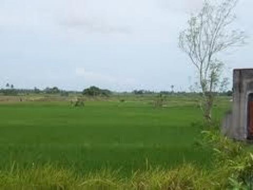 land-reserve.jpg