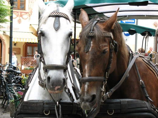 Carriage ride in St. Wolfgang in Salzkammergut