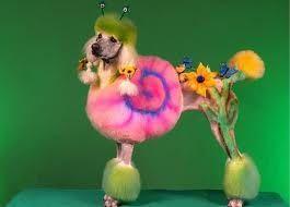 Hippie Poodle