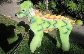 Dragon Poodle