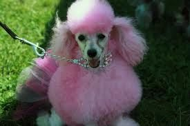 Pretty Pink Do