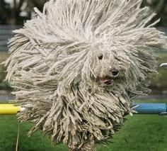 Dog or Porcupine?