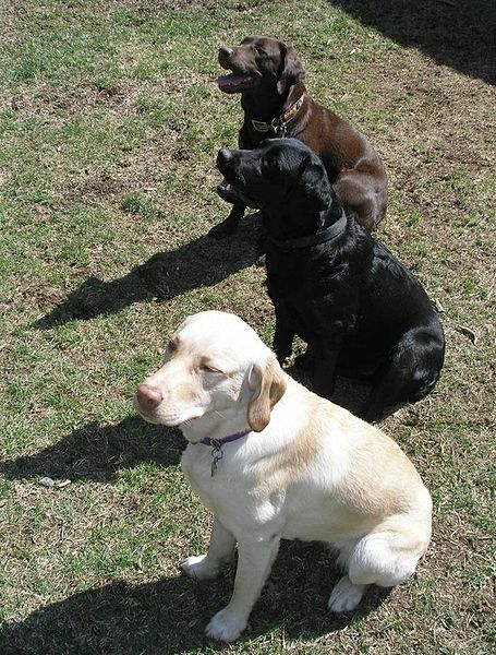 3 Varieties of Labs