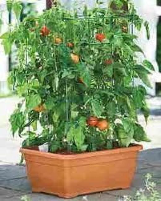 indoor-vegetable-garden.jpg